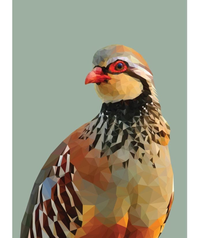 A digitally-rendered print of a red-legged partridge against a sage green background.
