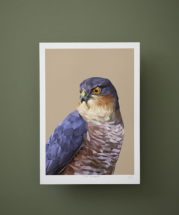 A sparrowhawk bird of prey print against a deep green wall.